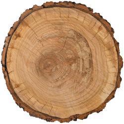 """Warm & Cozy Tree Trunk Die-Cut Cardstock 12""""X12"""""""